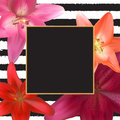 Abstract Frame with Lily Flower. Natural Background. Vector Illustration Royalty Free Stock Photo