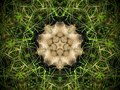 Abstract fur and grass mandala