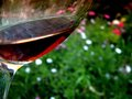 Abstract glass of red wine flower theme scene sipping cabernet shiraz garden in spring time in sunny garden Royalty Free Stock Photos
