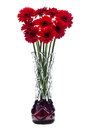Abstract glass vase on white background with red gerbera flowers Royalty Free Stock Photo