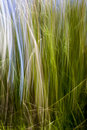 Abstract grass blur. Royalty Free Stock Photo