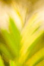 Abstract green background on blurred leaf Royalty Free Stock Images