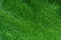 Abstract green background, plant leaf, Macro. Extreme closeup Royalty Free Stock Photo