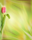 Abstract green background with tulip flower Royalty Free Stock Photo