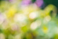 Abstract green bokeh for background the Stock Photo