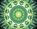 Abstract Green Color Nature Ba...