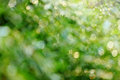 Abstract green nature background blurred Royalty Free Stock Photo