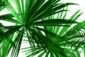 Abstract green palm leaves Royalty Free Stock Photo