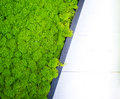 Abstract green stabilized moss surface decoration background Royalty Free Stock Photo