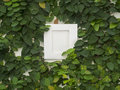 Abstract green wall with the frame on the white background Royalty Free Stock Photo