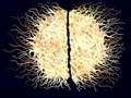 Abstract Hairy Brain Royalty Free Stock Photo