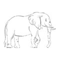Abstract illustration of an elephant.