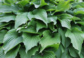 Abstract Image Of Leaves In Na...
