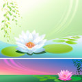 Abstract Lotus Flower In a Pond - Vector Backgroun Stock Image