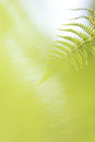 Abstract lush forest green fern background branch Royalty Free Stock Image