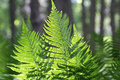 Abstract lush forest green fern branches in sunlight Stock Images