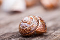 Abstract macro detailed photo of spiral shell on wooden surface Royalty Free Stock Photo