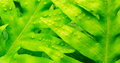 Abstract Macro of Tropical Leaf Stock Images