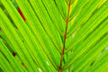 Abstract Macro of Tropical Leaf Royalty Free Stock Photo