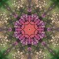 Abstract mandala picture