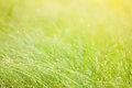Abstract moisture grass background dew Stock Photo