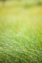 Abstract moisture grass background see my other works in portfolio Royalty Free Stock Photo