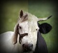 Abstract montage of cow and horse heads Royalty Free Stock Photo