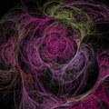 Abstract multicolored illustration on a dark background. Flower roses Royalty Free Stock Photo