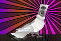 Abstract music background pigeon Stock Images