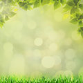 Abstract natural backgrounds Stock Images