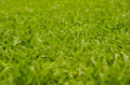 Abstract natural backgrounds grass Royalty Free Stock Photo