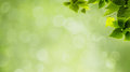 Abstract natural backgrounds with green foliage and beauty bokeh Stock Photo