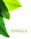 Abstract natural border fresh green leaves isolated on white background copy space with text spring season concept Royalty Free Stock Photo