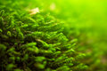 Abstract natural green background with selective focus Stock Images