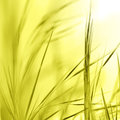 Abstract nature background blurred wheat germ Stock Photo