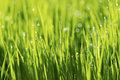 Abstract nature background with grass and drops. Royalty Free Stock Photo