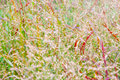 Abstract nature background grass summer or autumn Royalty Free Stock Images