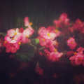 Abstract nature background with pink flowers blurred behind rainy window glass blurred imag toned instagram effect Stock Images