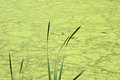 Abstract Nature Background Pond Swamp Water, Algae