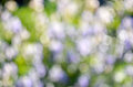 Abstract nature bokeh background - blur colorful bokeh. Royalty Free Stock Photo