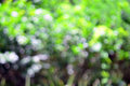 Abstract nice background of blurred tree with beautiful bokeh Royalty Free Stock Photo
