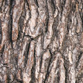 Abstract pattern of bark on old pine tree Royalty Free Stock Photo