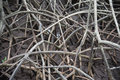 The abstract patterns of the mangrove