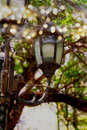 Abstract photo of antique street lantern among tree branches. vintage filtered image with glitter lights Royalty Free Stock Photo