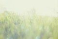 Abstract photo of light burst among grass and glitter bokeh lights. image is blurred and filtered . Royalty Free Stock Photo