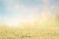 Abstract photo of wheat field and bright sky . instagram effect. Royalty Free Stock Photo