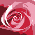 Abstract Pink Rose Stock Photography