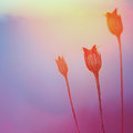 Abstract Plant Silhouette at sunset Royalty Free Stock Photo