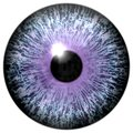 Abstract purple eye  on white Royalty Free Stock Photo