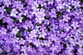 Abstract purple nature Royalty Free Stock Photo